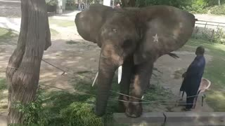 Elephant is grabbing money in Lahore Zoo  - Video