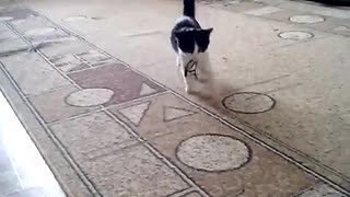 cat trained like a dog  - Video