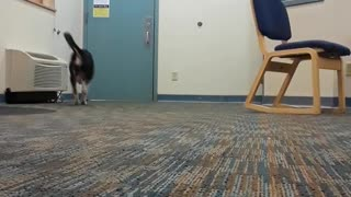 Whispering Puppy Play - Video