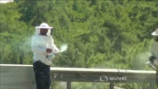 Truck overturns releasing thousands of bees on Turkey highway - Video