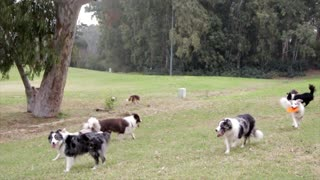 A group of beautiful dogs training on the ground