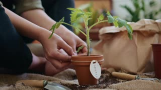 Watch my story with my baby plant !