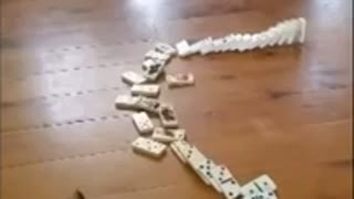 Cute kitten playing dominos
