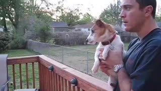 Jack Russell Completely Loses It When Owner Mentions Squirrels - Video