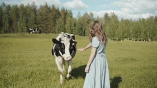 A little girl with a pretty cow