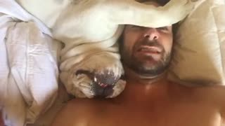 Grumpy dog makes hilarious sounds when woken up - Video