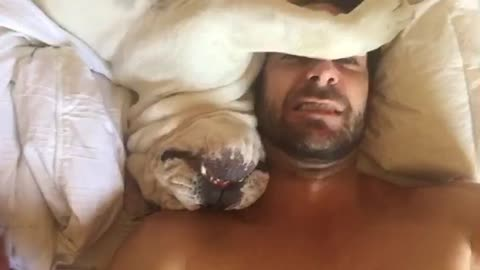 Grumpy Dog Sounds Hilarious When Being Woken Up!