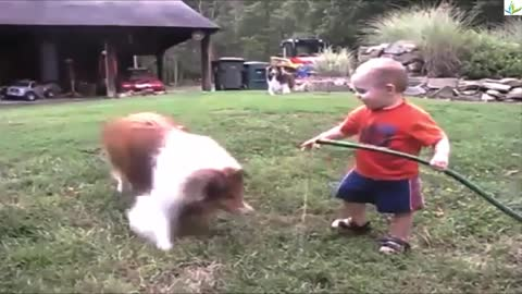 Baby and dog playing with hose Full HD