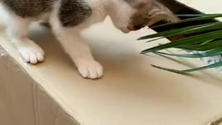 Kitten absolutely fascinated by palm leaf