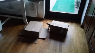 Funny, moving box with cute kittens playing - Video
