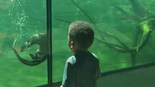 Friendly otter plays with little boy at the aquarium - Video