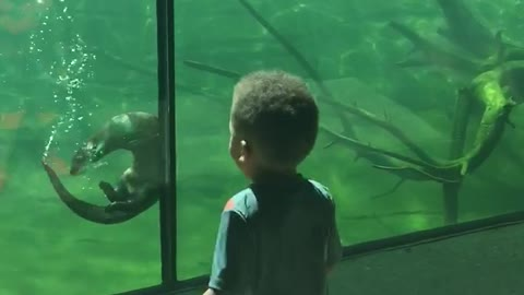 Friendly otter plays with little boy at the aquarium
