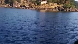 An Eagle Hunts Next to a Fishing Boat - Video