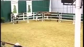 Horse soars through air in breathtaking fashion during impressive free jumps - Video