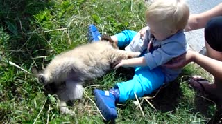 Little kid and little dog  - Video