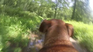 Dog Perspective GoPro: Samson Searches for Stick and Breaks into Fast Run - Video