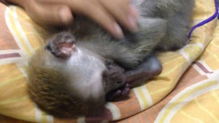 Mama...Don't wake me up please! - Video
