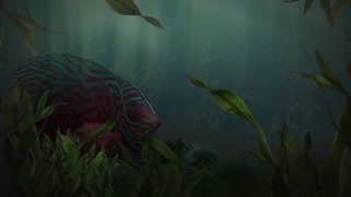 Camera Under Water Records Fishes Movements
