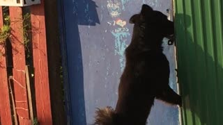 Dog Opens Door By Himself! - Video