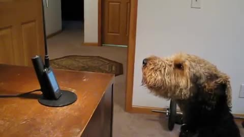 Dog 'Talks' To The Phone After Hearing His Mom Speaking On It
