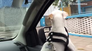 Music white dog black collar sticks head out of window while driving past graffiti