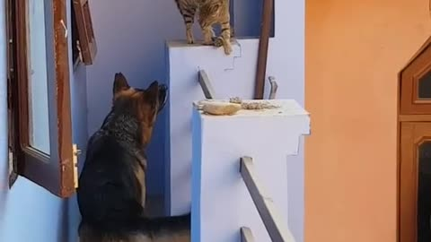 Furious Dog is scared by small cat!!!