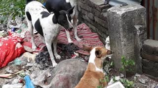Dog-cat brawl | Dog And Cat Funny Video