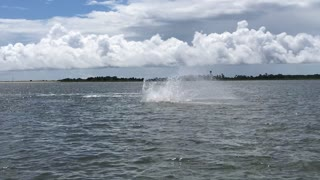 Dolphin Jumping Display - Video