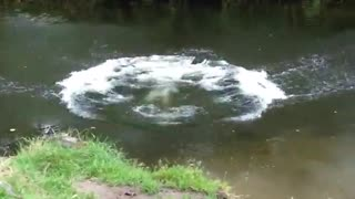Black dog jumps and splashes in river - Video
