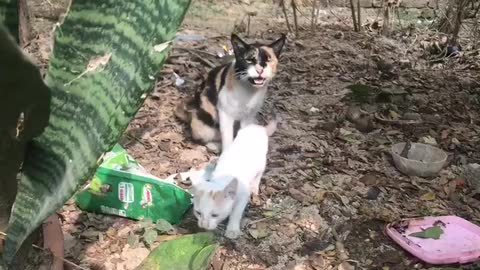 A cat and her cute babies playing in small garden