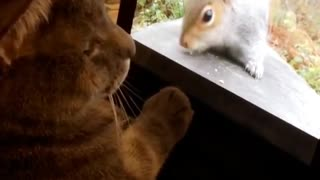 Cat tries to make contact with squirrel on video - Video
