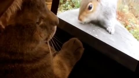 Cat tries to make contact with squirrel on video