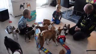 What it's like to live with 16 Basenji puppies - Video