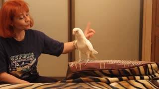 Dancing parrot shows off impressive moves