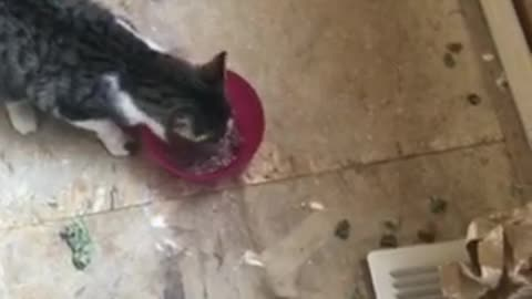 Heroic homeowners rescue kitty trapped in the wall