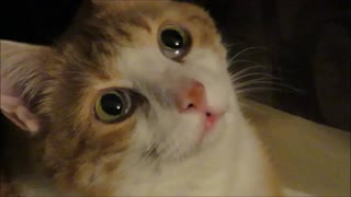 Cute cat face is definitely meme-worthy!  - Video