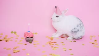 happy Birthday rabbit
