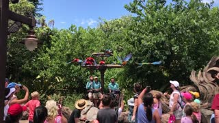 Slow Motion Release of the Macaw Parrots - Video
