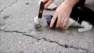 Rescuing a cat with its head stuck in a jar - Video