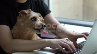 Woman using computer with dog stock video