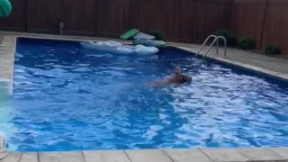 Doggo Conquers Fear of Pool to Save Human