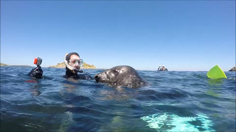 Seal Snorkeling on Isles of Scilly