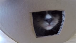 "Petty the Kitten enjoys ""Box of Happiness"""