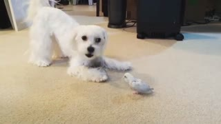 Dog And Parrot Can't Have Enough Of Their Unique Friendship - Video