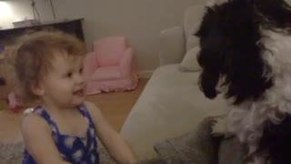 Baby gives kisses to Shih Tzu dog - Video