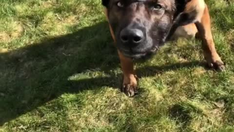 Skillful dog balances cup of water on head while walking