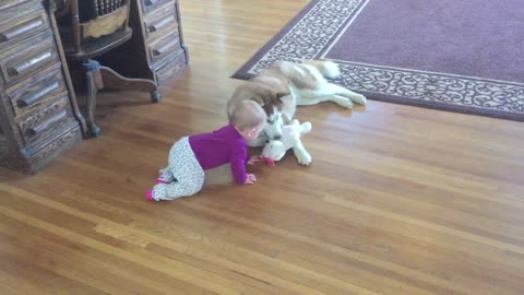 Is this the most adorable tug-of-war game ever?