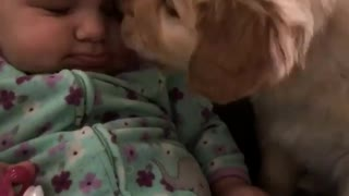 Sweet puppy gives baby precious kisses  - Video