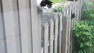 Outside cat just chillin there