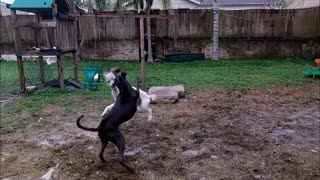 General Kai vs. Sully Playtime  - Video